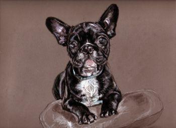 French Bulldog Study